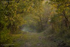 landscape_paesaggi_foto_ambientali_varie-10