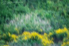 landscape_paesaggi_foto_ambientali_varie-16