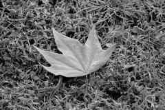landscape_paesaggi_foto_ambientali_varie-19