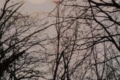 landscape_paesaggi_foto_ambientali_varie-3