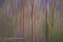 landscape_paesaggi_foto_ambientali_varie-9