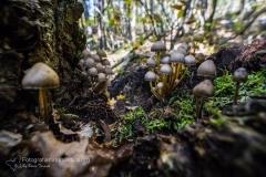 Funghi_fungi_mushroom_-Fruchtkörper_sporophore_esporocarpo-1
