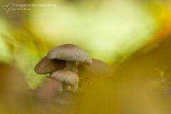 Funghi, fungi, mushrooms, Fruchtkörper, sporophore, esporocarpo
